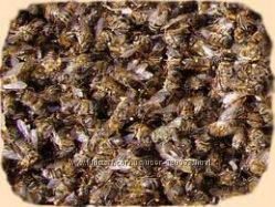 Пчелиный подмор в наличии.